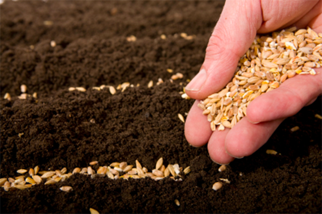 5-29-15 plant seeds to your success in